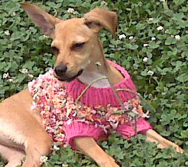 Dog Sweater for Bella